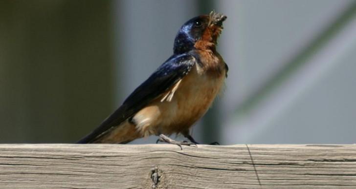 Gotlandia – miejsce do badania ptasich zdrad